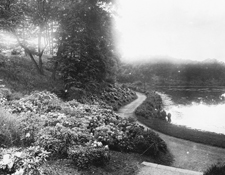 Olmsted Park, Boston, Massachusetts Wards Pond Looking West, August 6, 1904. Courtesy of the National Park Service Frederick Law Olmsted National Historic Site.