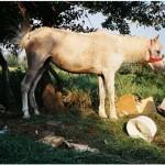 """ngd horse,"" by Saša Trifunović"